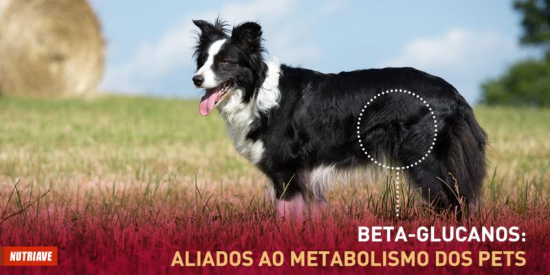 beta glucanos cachorro