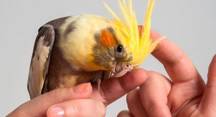 aves interativas e dóceis